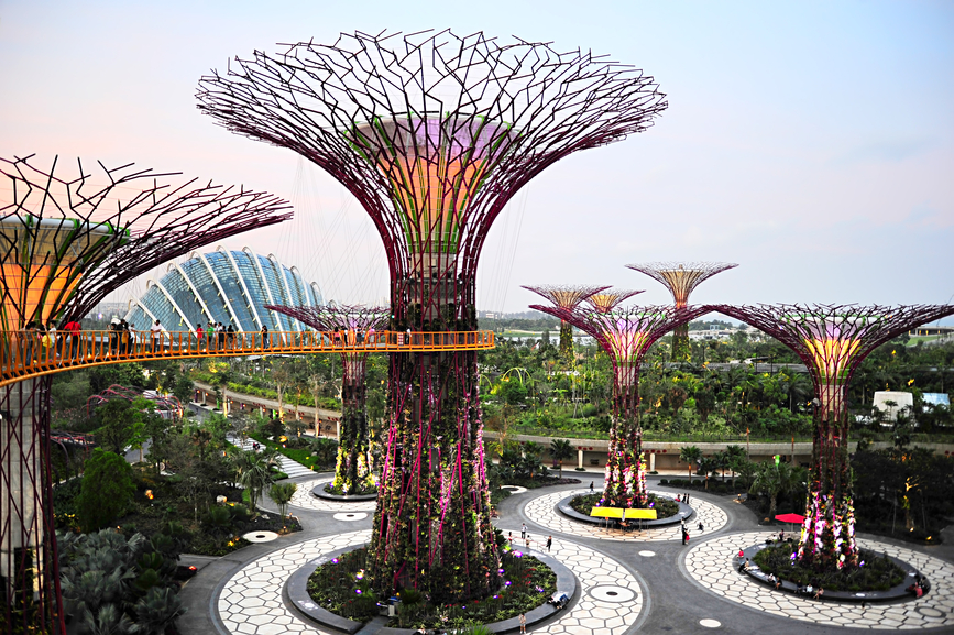Singapore's Unique Urban Forest Park | ForestProjects.org